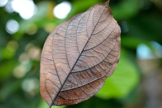 Free stock photo of dry, texture, leaf, autumn