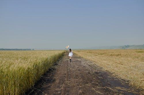 Weibchen Im Weißen Kleid, Das Entlang Straße Im Feld Geht