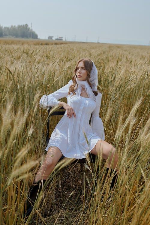 Stilvolle Dame Im Kleid, Die Auf Stuhl Im Feld Des Weizens Sitzt