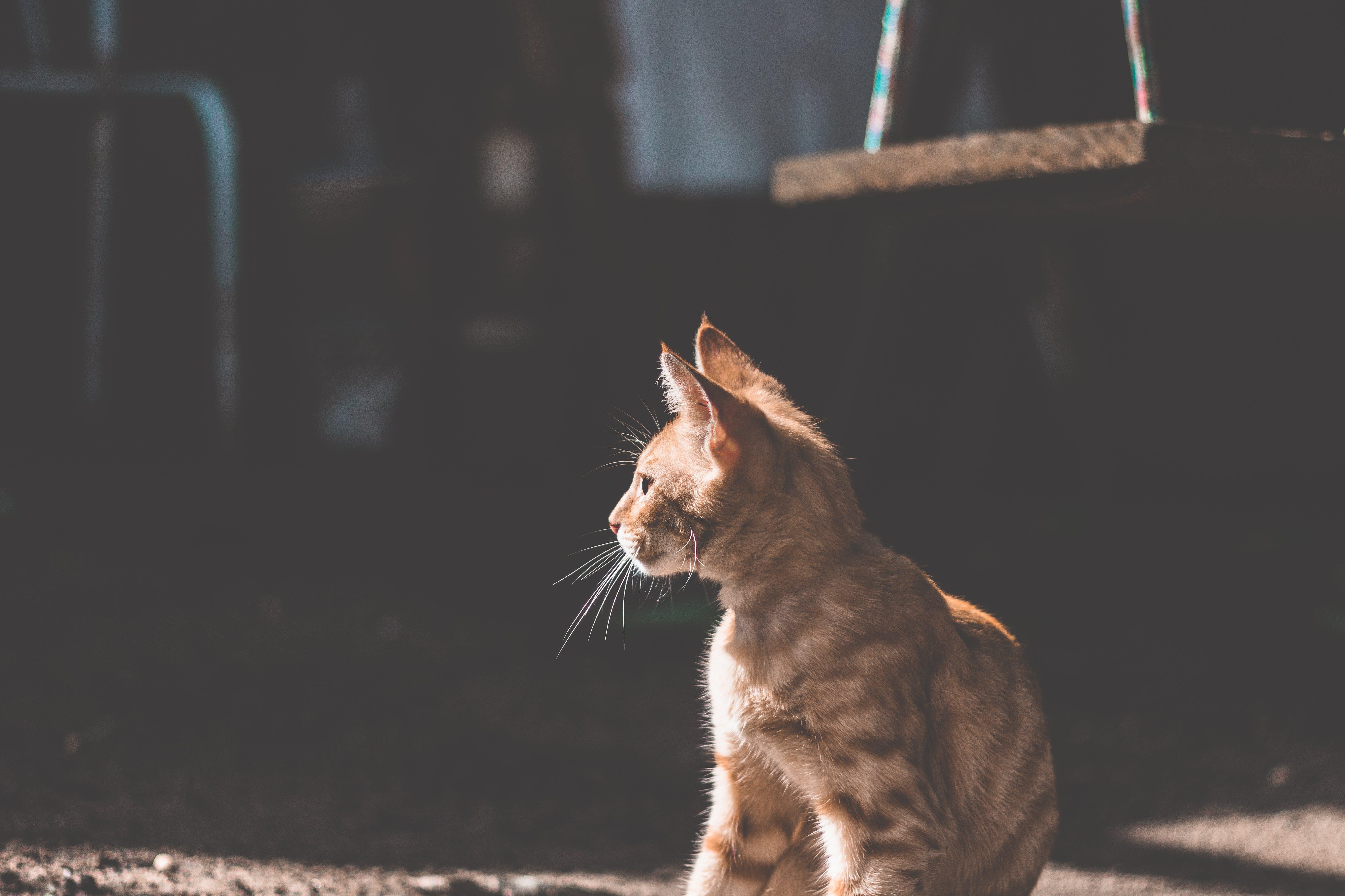 Free stock photo of animal, cat, light, pet