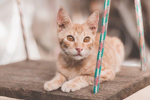 Darmowe zdjęcie z galerii z kot, małe zwierzątko, zwierzę domowe