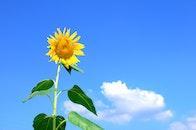 nature, sky, blue
