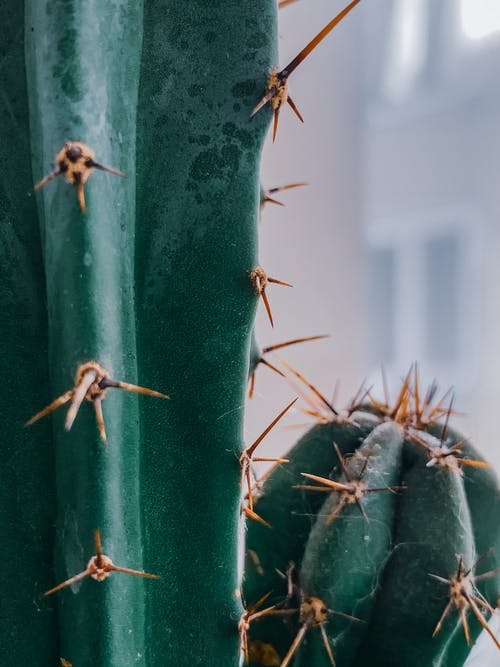 Closeup of green fresh cactus with spiky needles places on window in soft focus
