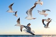 sea, sky, flying
