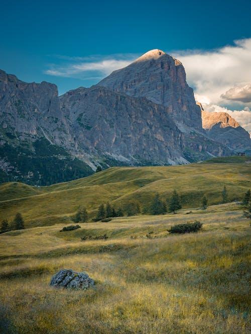 Grassy field near rocky mountains