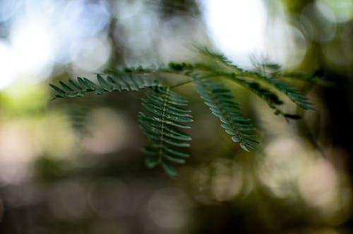 Gratis lagerfoto af 35 mm, grønt blad, makro, natur