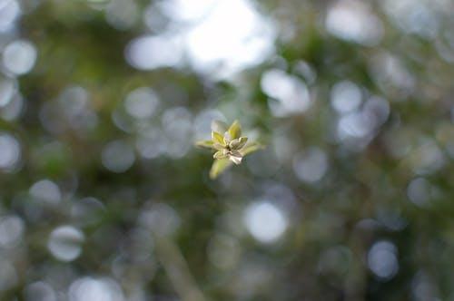 Gratis lagerfoto af blomst, dejligt, klassisk, makro