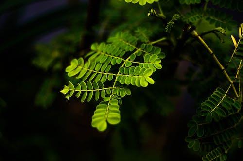 Darmowe zdjęcie z galerii z gałęzie, natura, ogniskować, rośliny