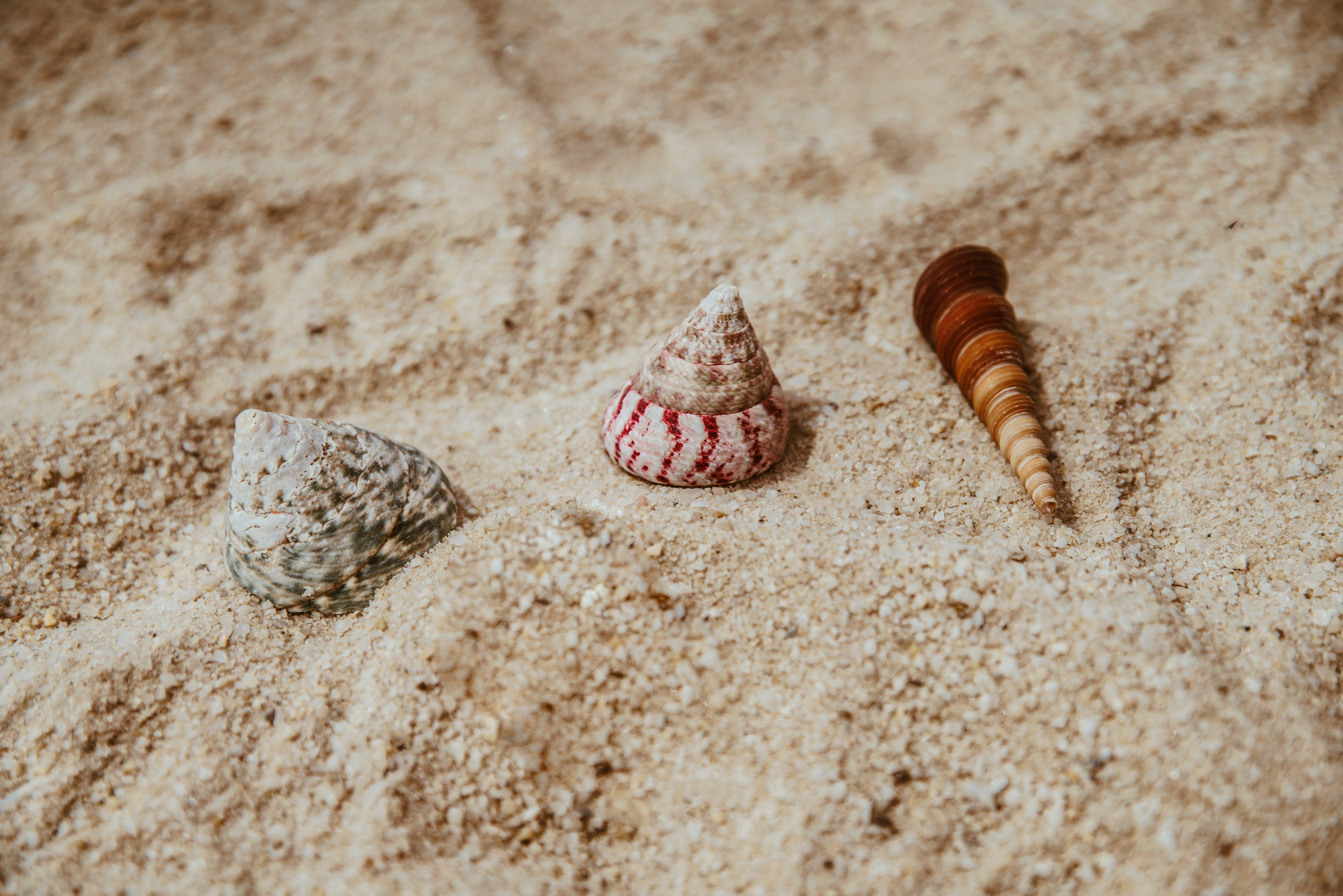 Three Assorted Sea Shells on Brown Sand