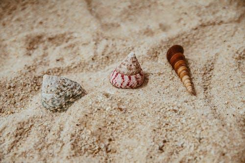Immagine gratuita di colore, conchiglia, estate, litorale