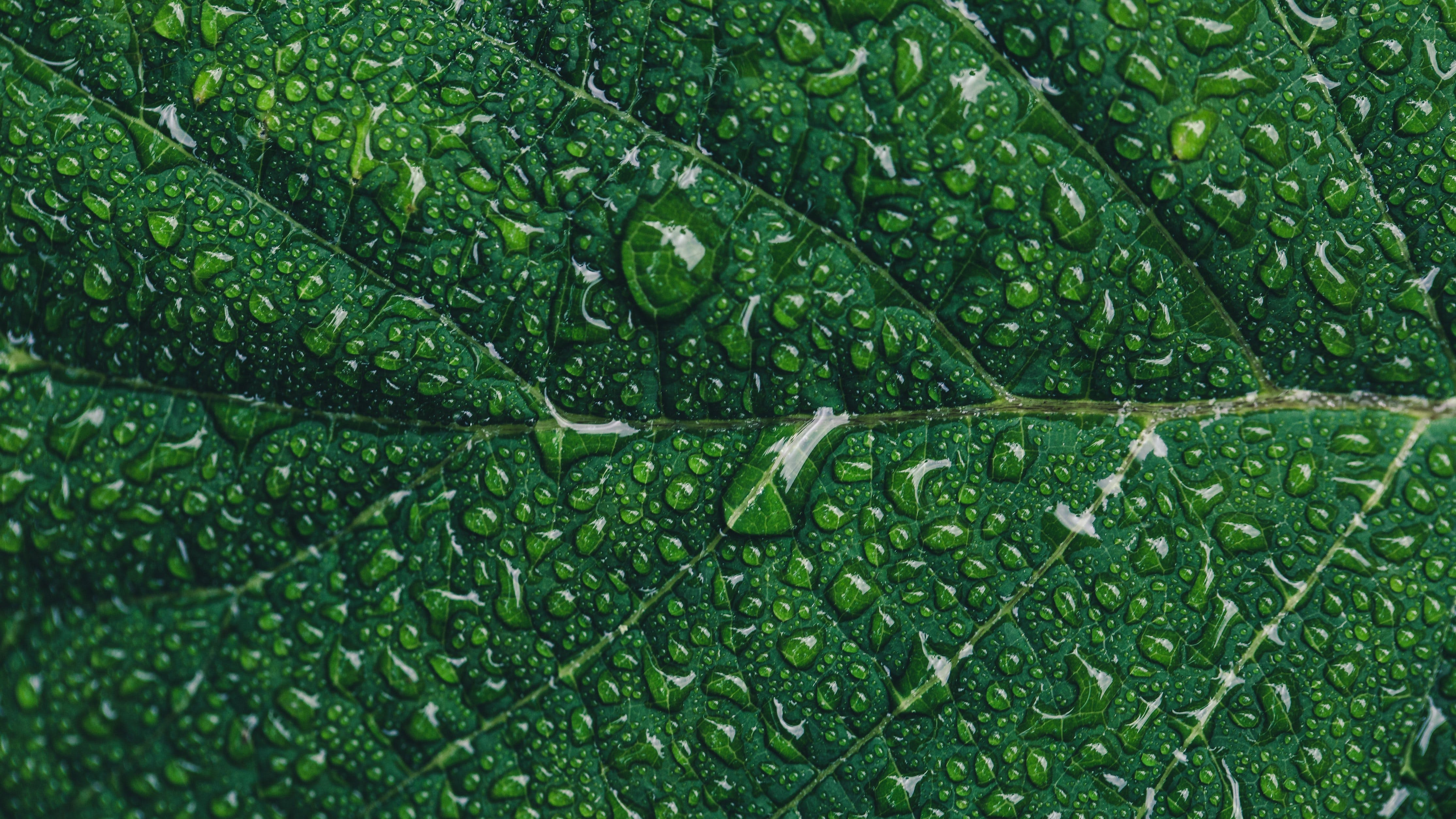 Close-up Photography of Green Leaf With Drops of Water
