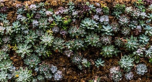 Immagine gratuita di bellissimo, crescita, fioritura, flora