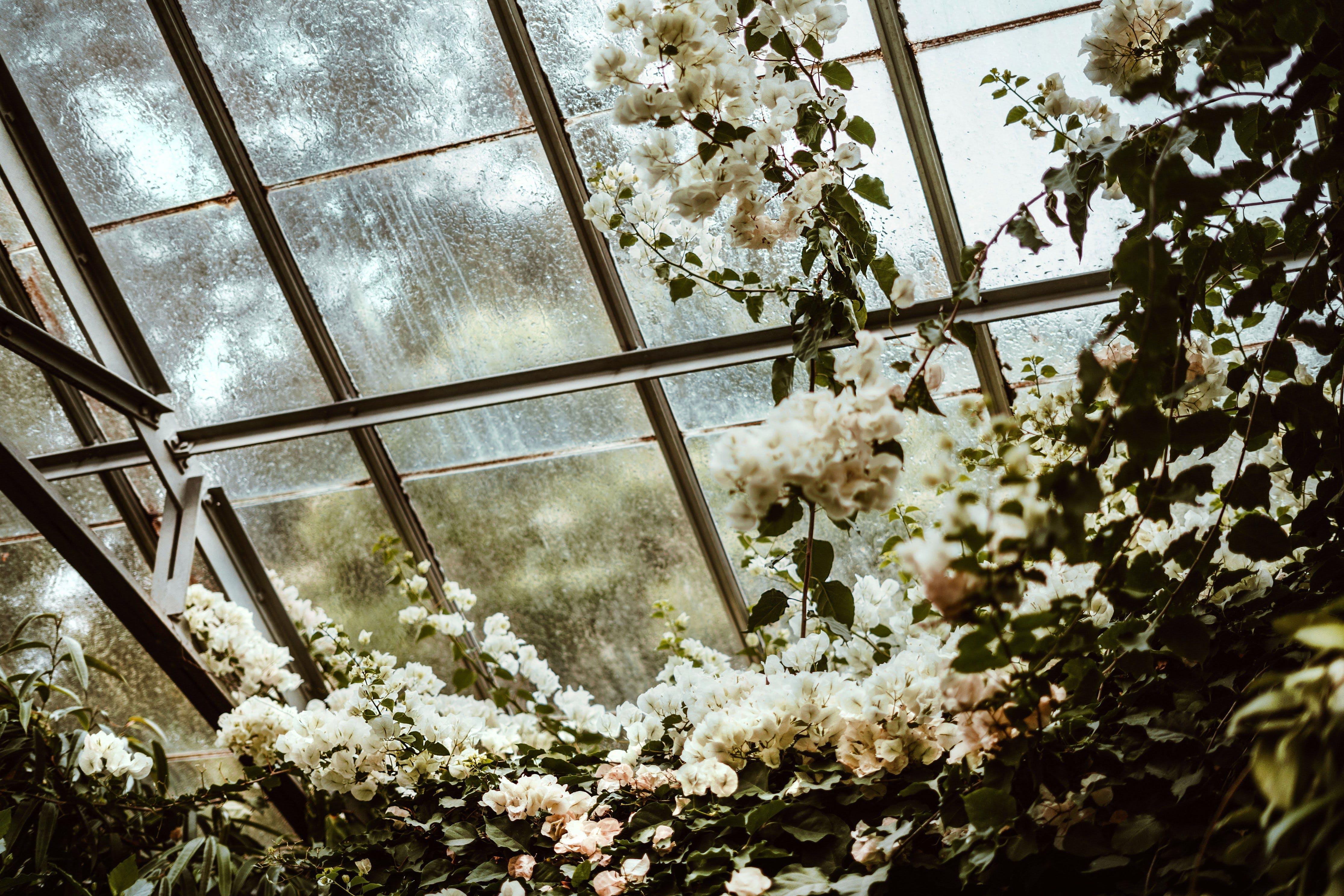 Gratis lagerfoto af arkitektur, blomst, blomstrende, dagslys