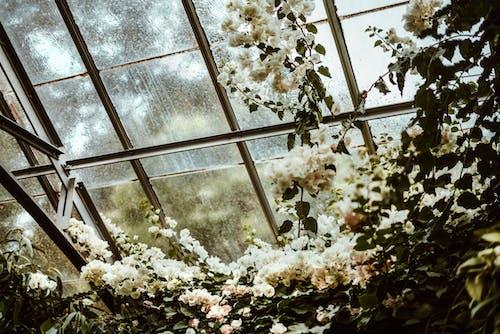 Darmowe zdjęcie z galerii z architektura, drzewo, flora, gałąź