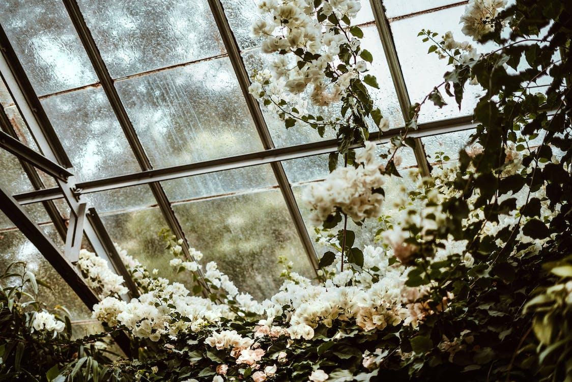 White Cluster Flowers Beside Glass Window