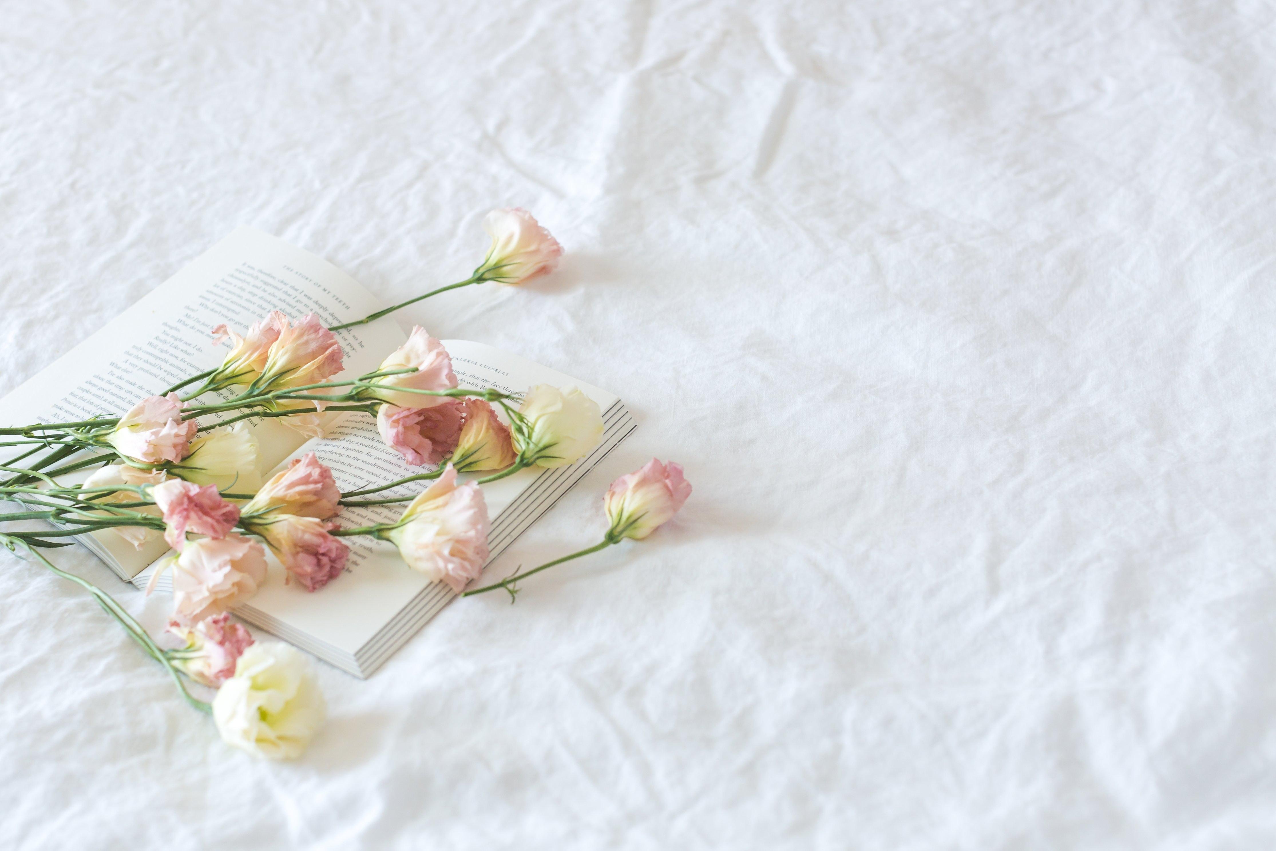 1000+ Beautiful White Background Photos · Pexels · Free Stock Photos