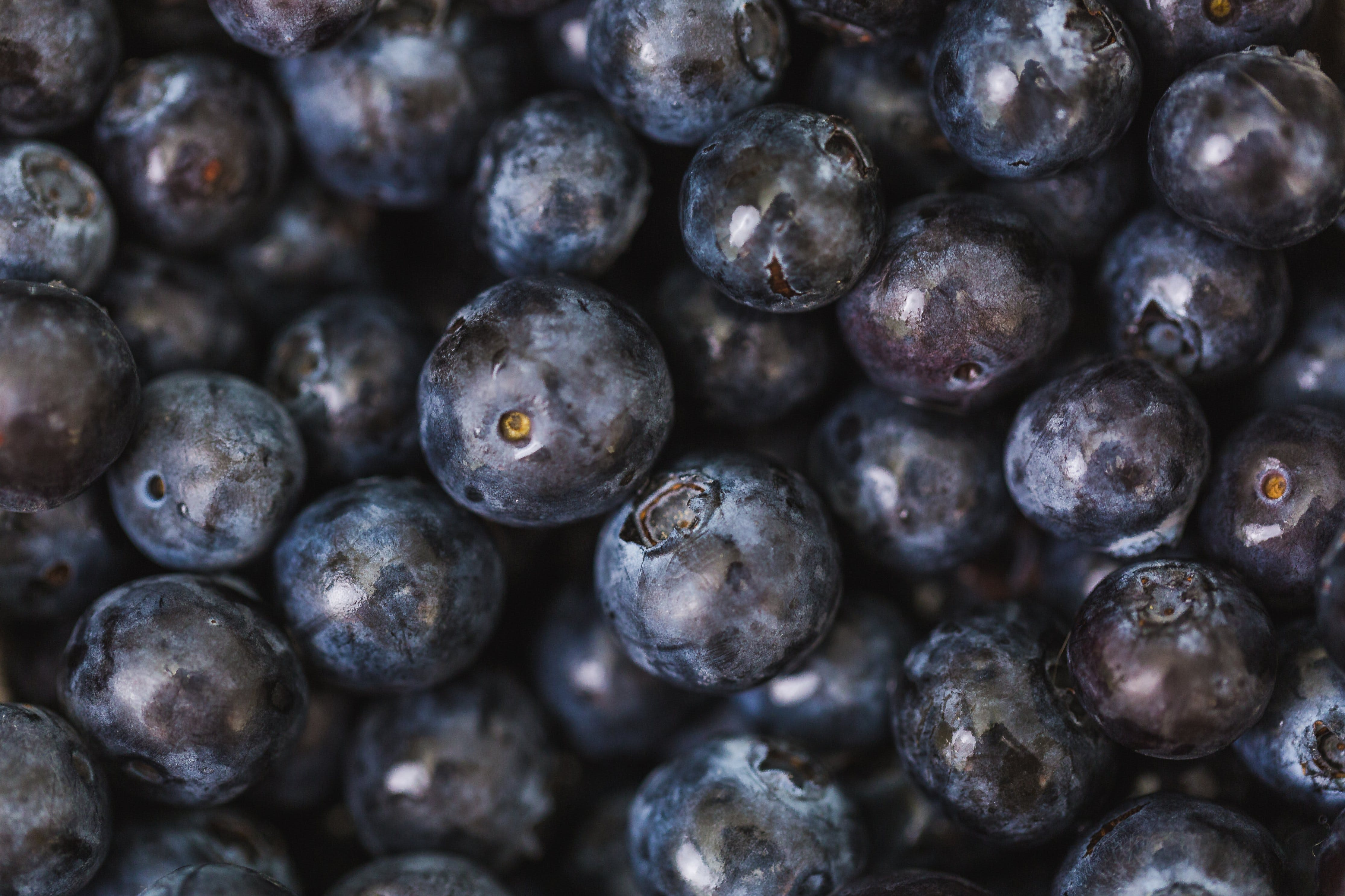 Free stock photo of healthy, blueberries, fruit, fresh