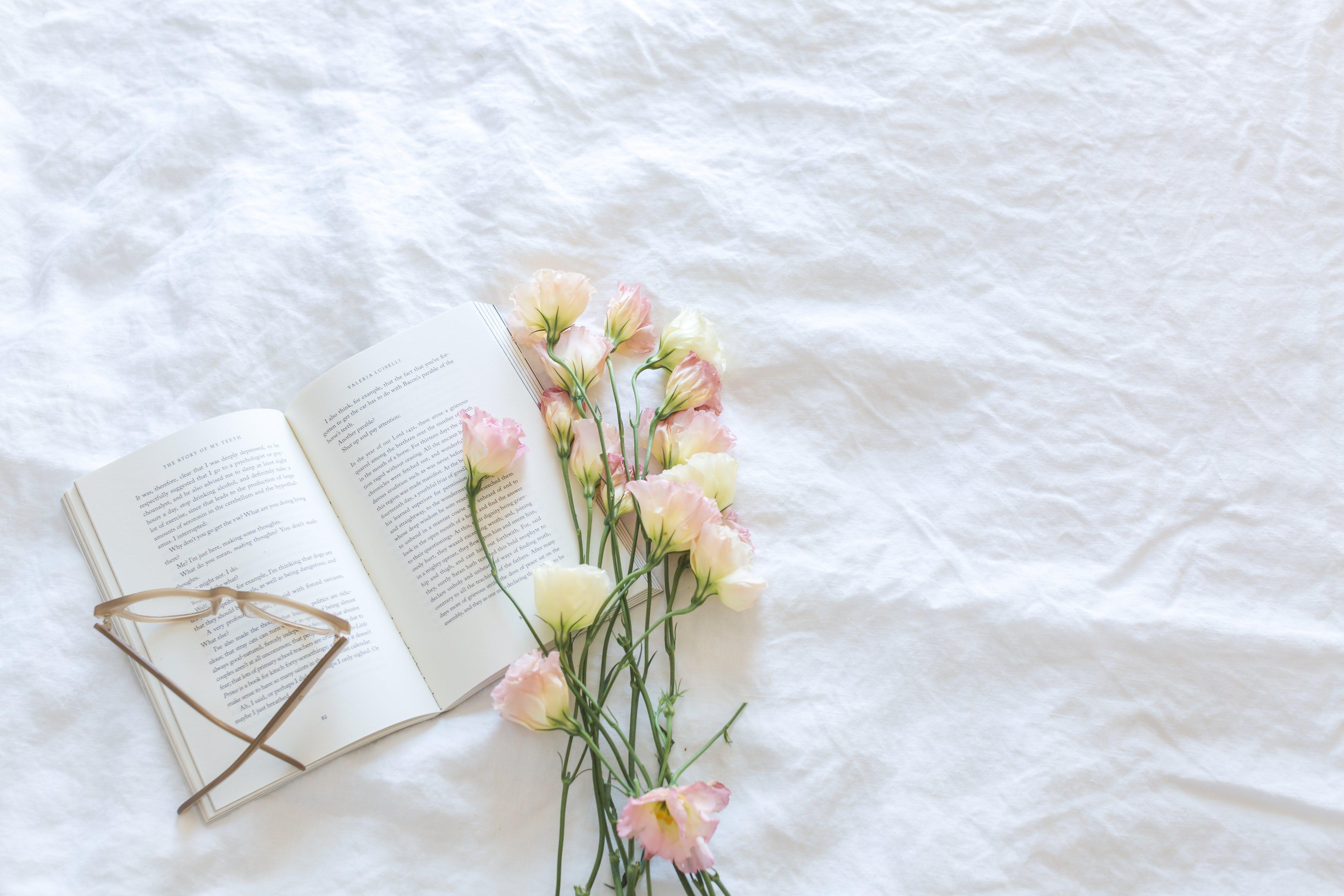 blanket, bloom, blooming
