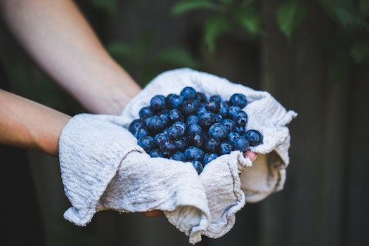 Free stock photo of food, healthy, hands, summer