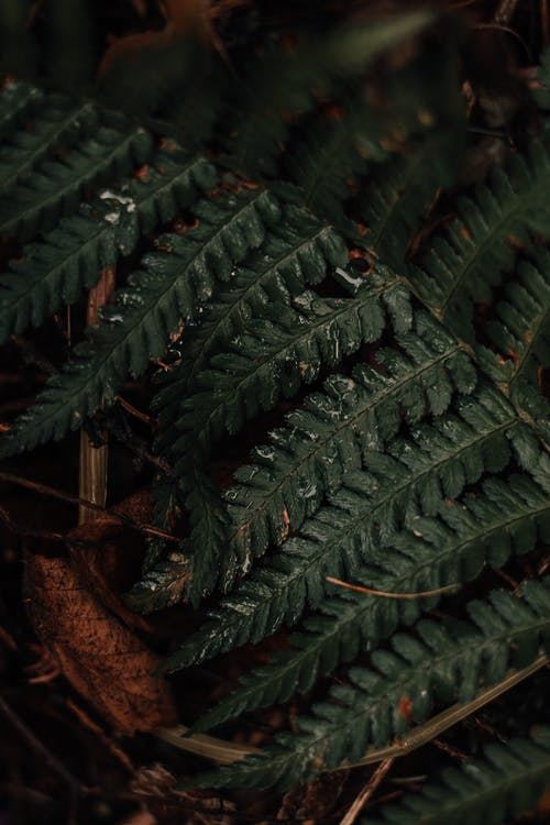 Closeup of green fresh leaves of fern on stem growing in dark forest