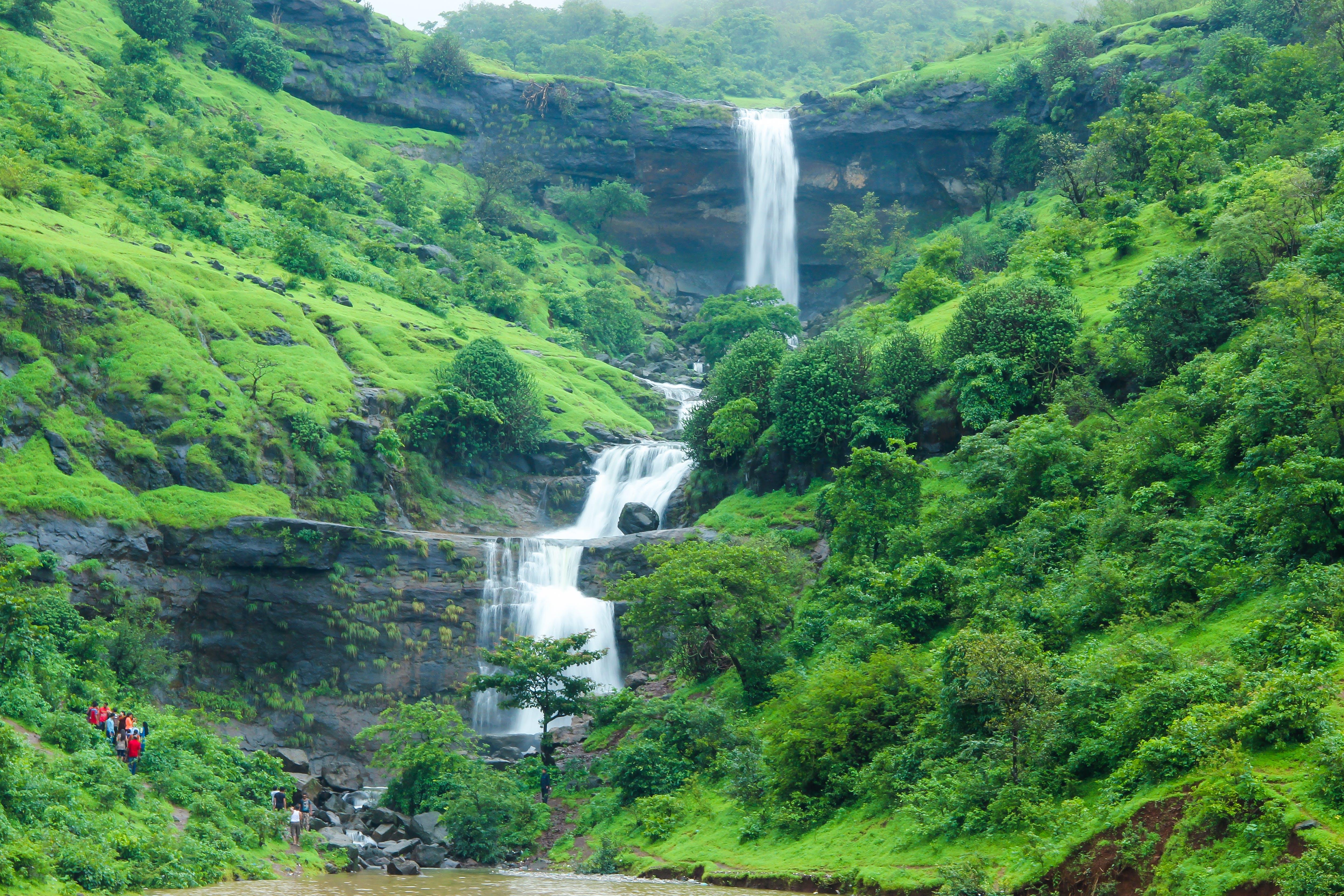 Základová fotografie zdarma na téma dešťový prales, fotografie přírody, hory, les