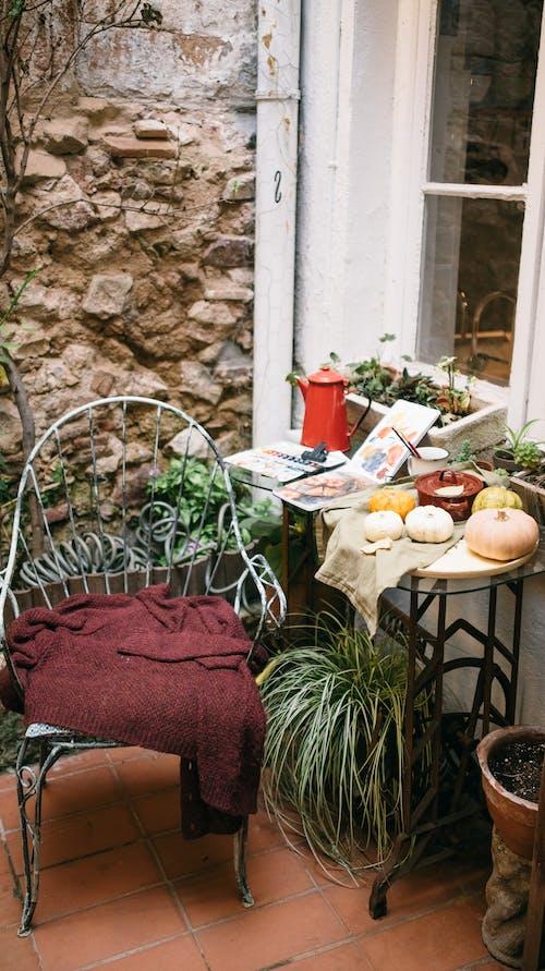 Gratis arkivbilde med blad, blomst, blomsterpotte, bord