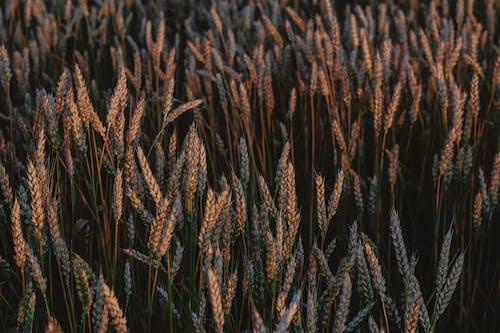 Kostnadsfri bild av åkermark, beskära, bete, blad