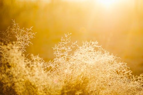 Бесплатное стоковое фото с абстрактный, желтый, живописный, золотой