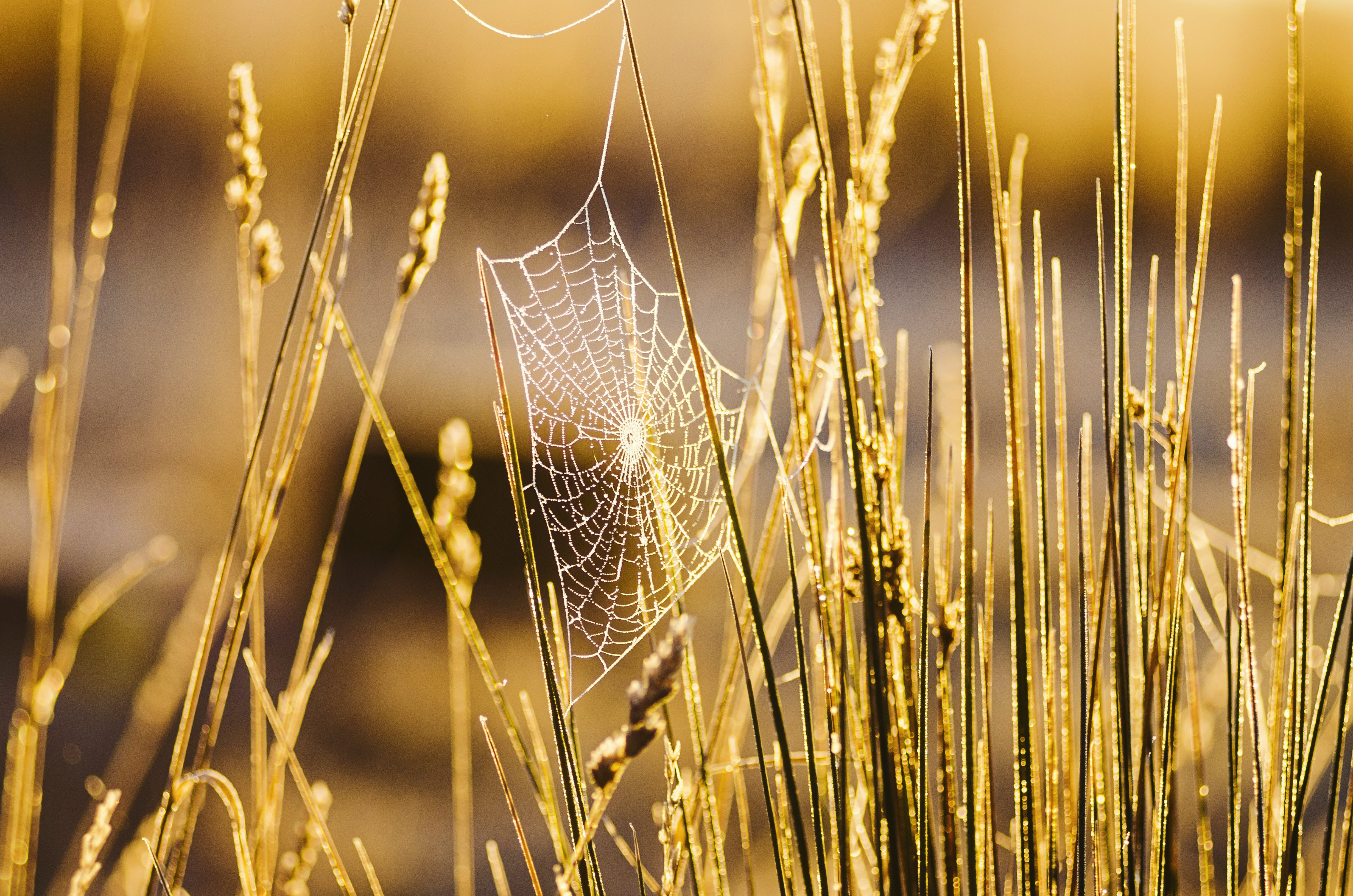 Бесплатное стоковое фото с максросъемка, паутина, пахотная земля, предзакатный час