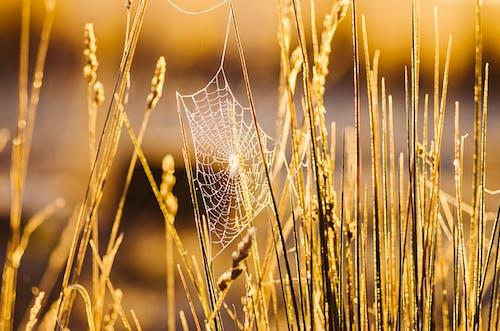 Darmowe zdjęcie z galerii z makro, natura, ogniskować, pajęczyna