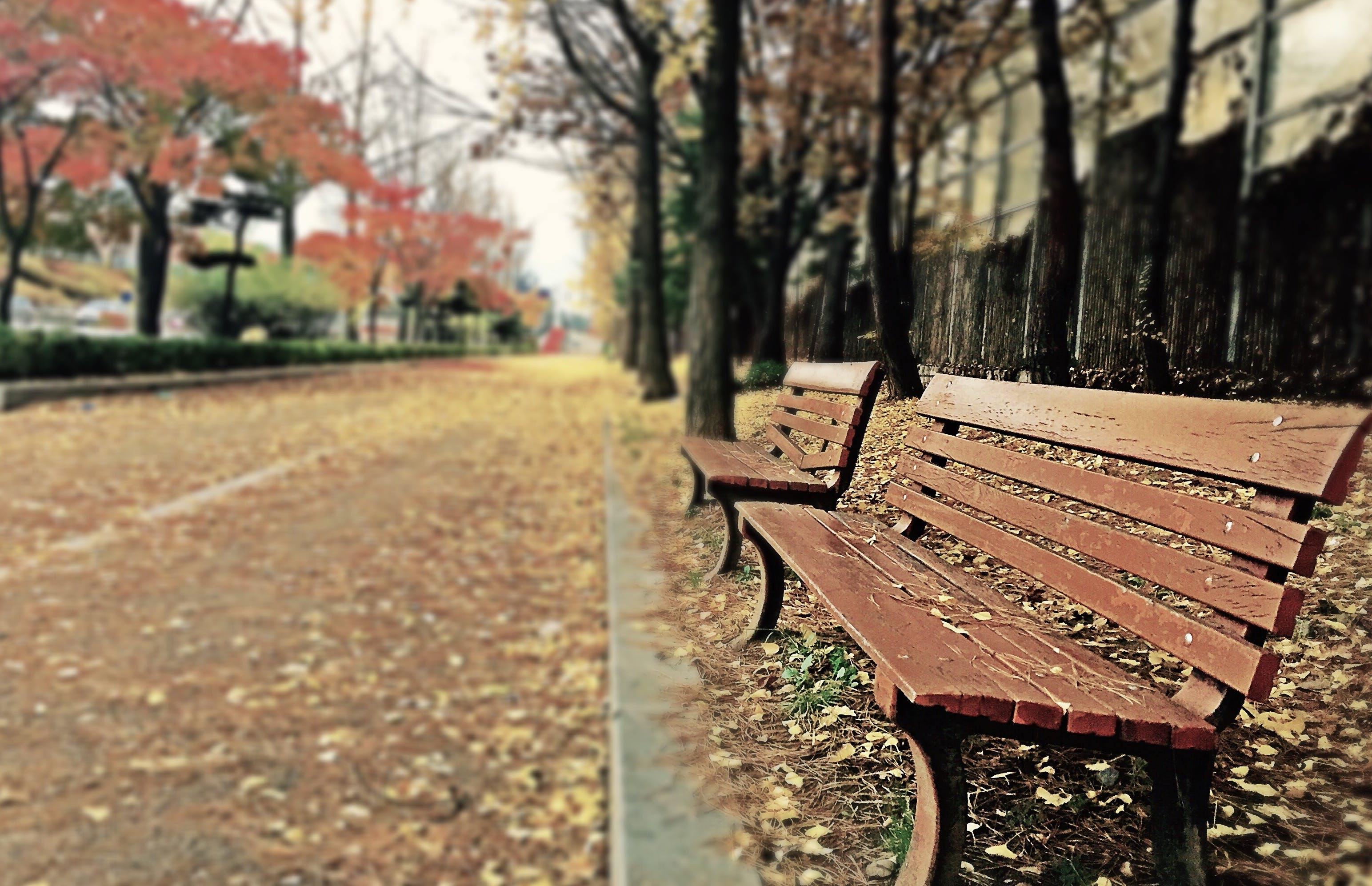 Brown Wooden Bench With Brown Dried Leaves