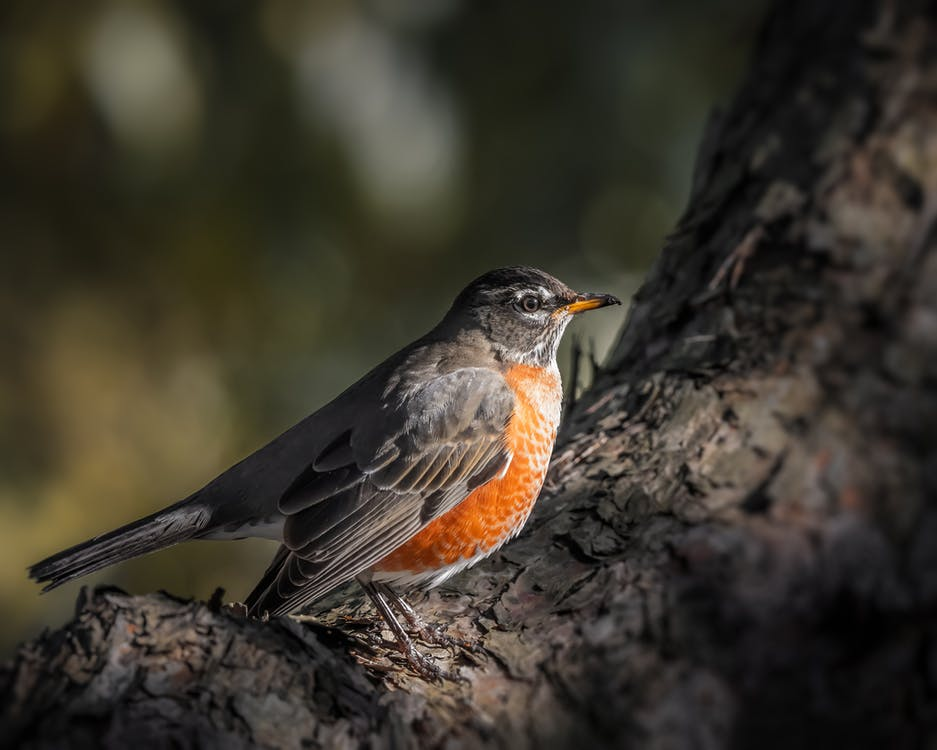 Cute robin sitting on tree branch