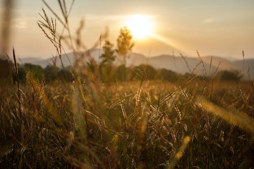 Free stock photo of grass, grassland, landscape