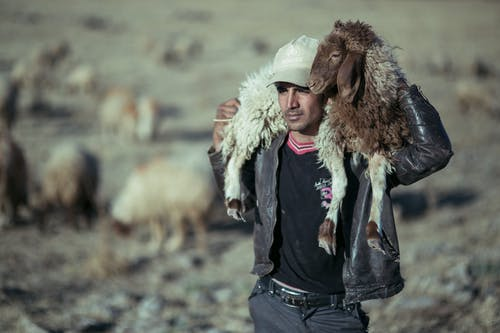 Ethnic man carrying sheep on shoulders on farm