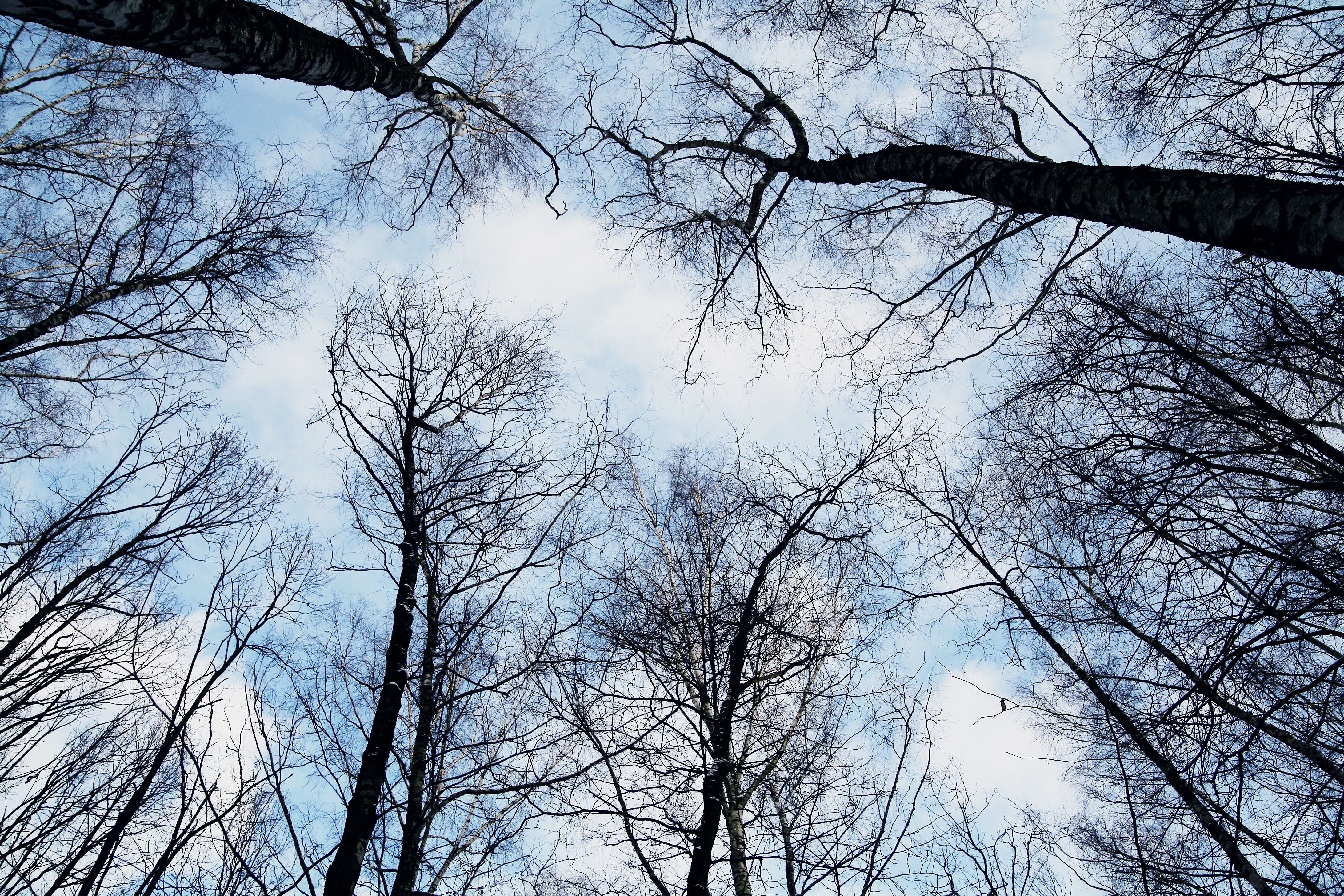 Free stock photo of sky, forest, trees, winter