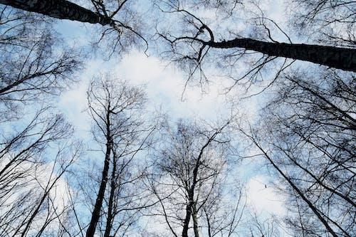 Darmowe zdjęcie z galerii z drzewa, las, niebo, patrzenie w górę