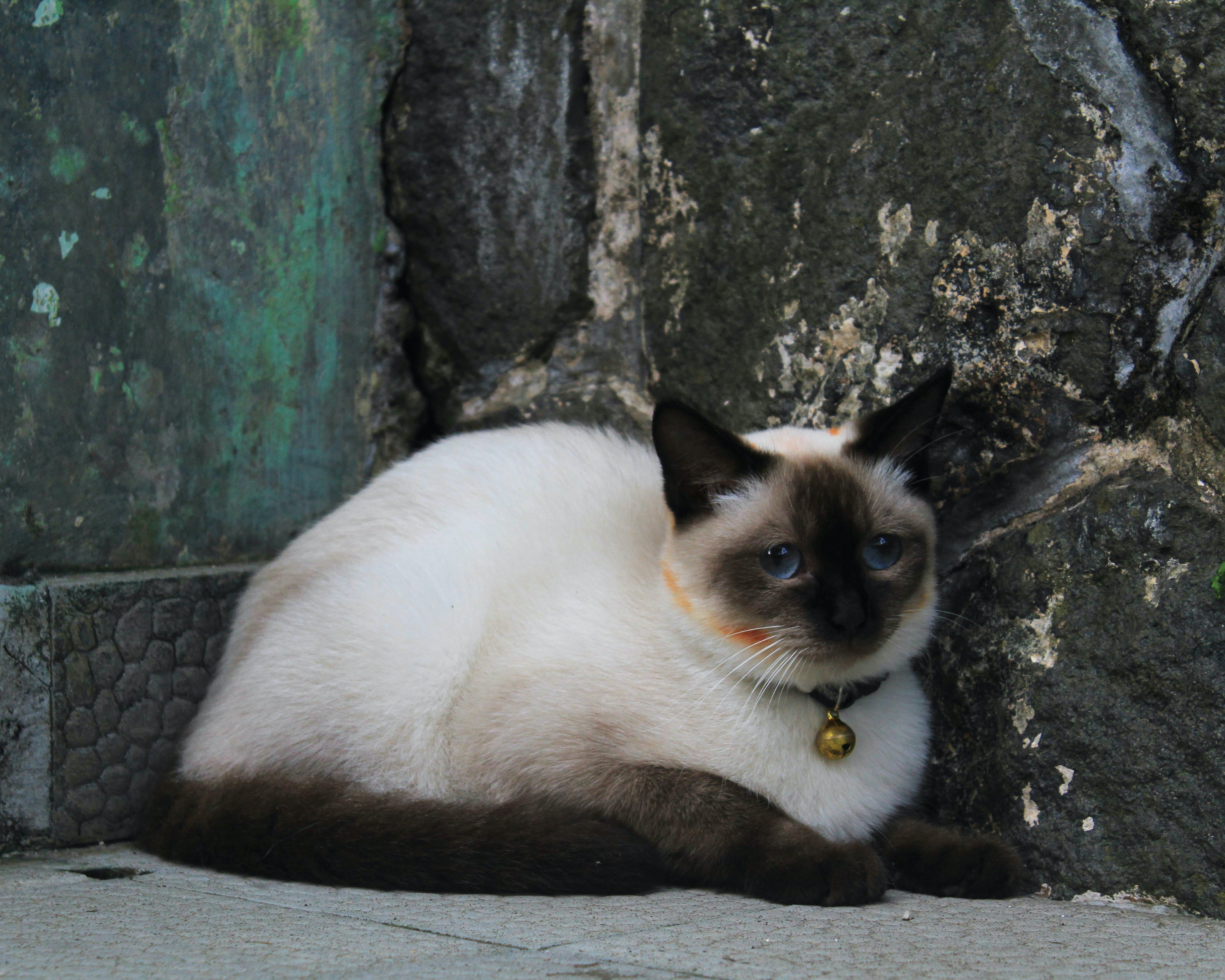 Short-furred White and Black Cat on Gray Concrete Surface