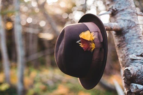 Fashionable hat hanging on birch tree