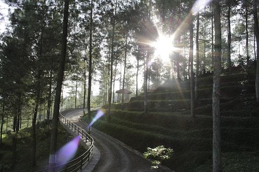 Kostenloses Stock Foto zu straße, landschaft, natur, sonne