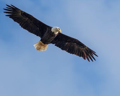 Δωρεάν στοκ φωτογραφιών με άγρια φύση, άγριος, αέρας