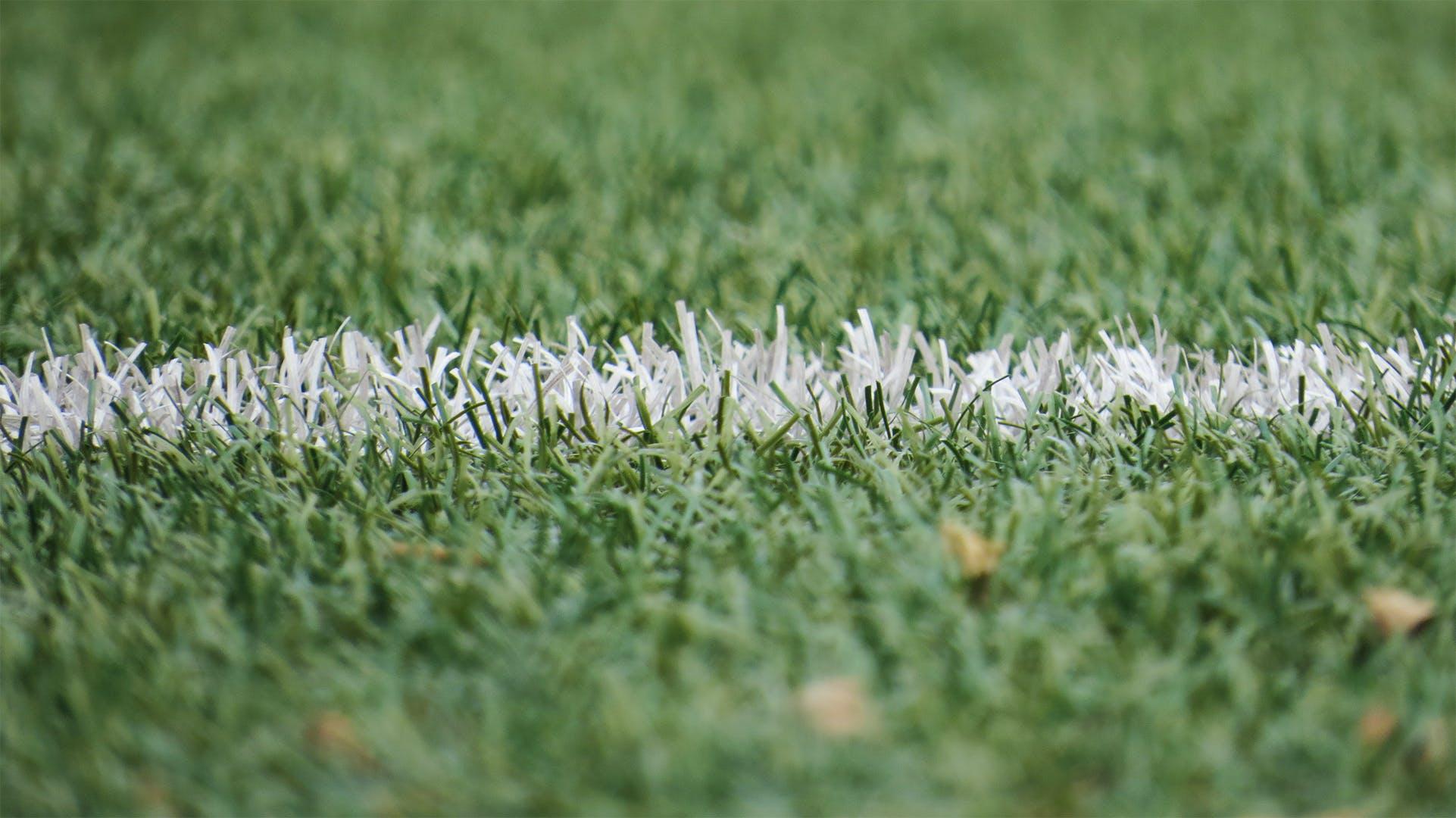 Grass on a football field