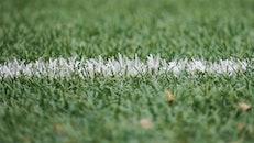 field, grass, grassland