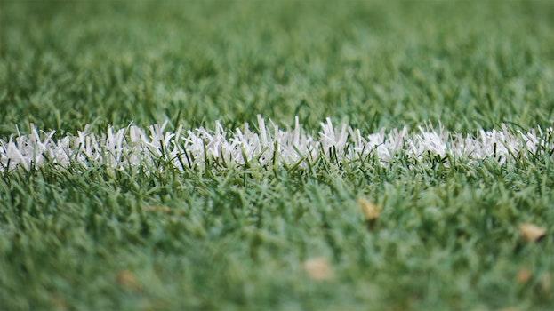 Free stock photo of field, grass, grassland, football