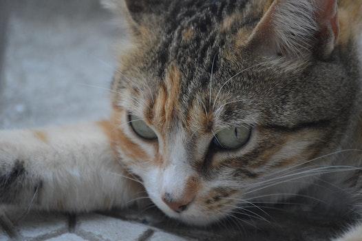 Free stock photo of animal, eyes, cat, close-up