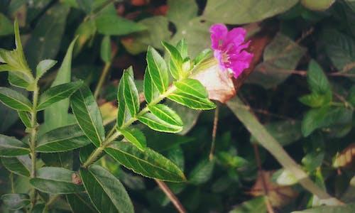 Foto d'estoc gratuïta de flors boniques, verd