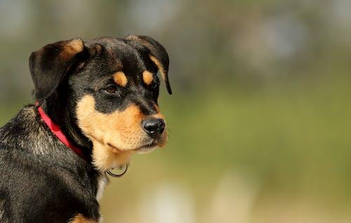 Gratis arkivbilde med dyr, gress, hund