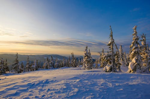 Snowy forest in winter located in highland