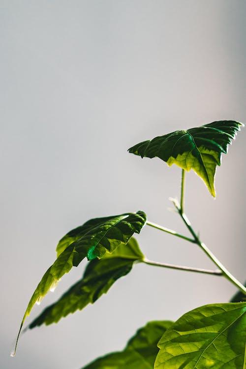 คลังภาพถ่ายฟรี ของ กลางแจ้ง, การเจริญเติบโต, ชีววิทยา, ดอกไม้