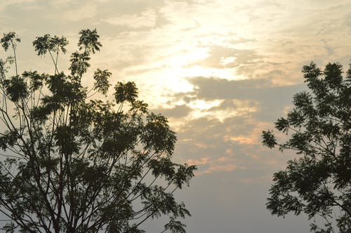 Free stock photo of evening sky, evening sun, tree