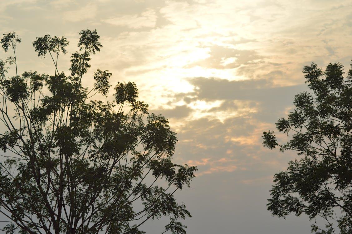 Free stock photo of evening sky, evening sun, tree